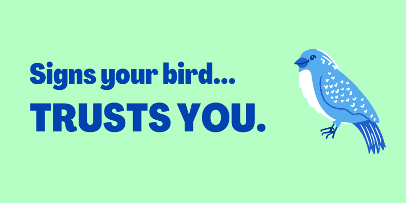 Signs Your Bird Trusts You, Your bird is bonded to you